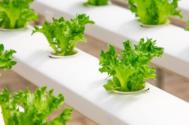 smart hydroponic systems beginners